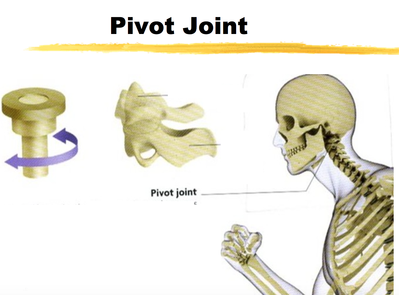 ch.1- joints flashcards by proprofs, Human Body