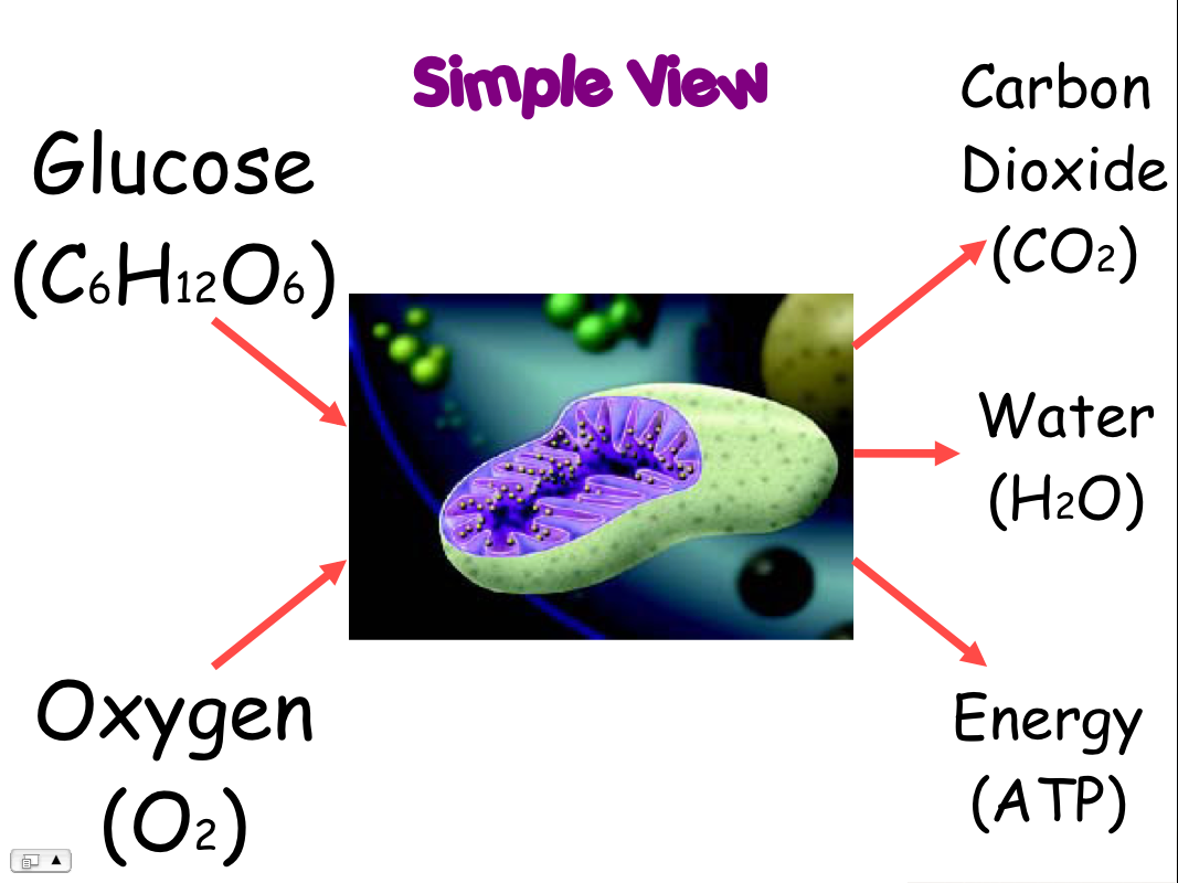 Review cellular respiration and photosynthesis flashcards by proprofs preview flashcards ccuart Image collections