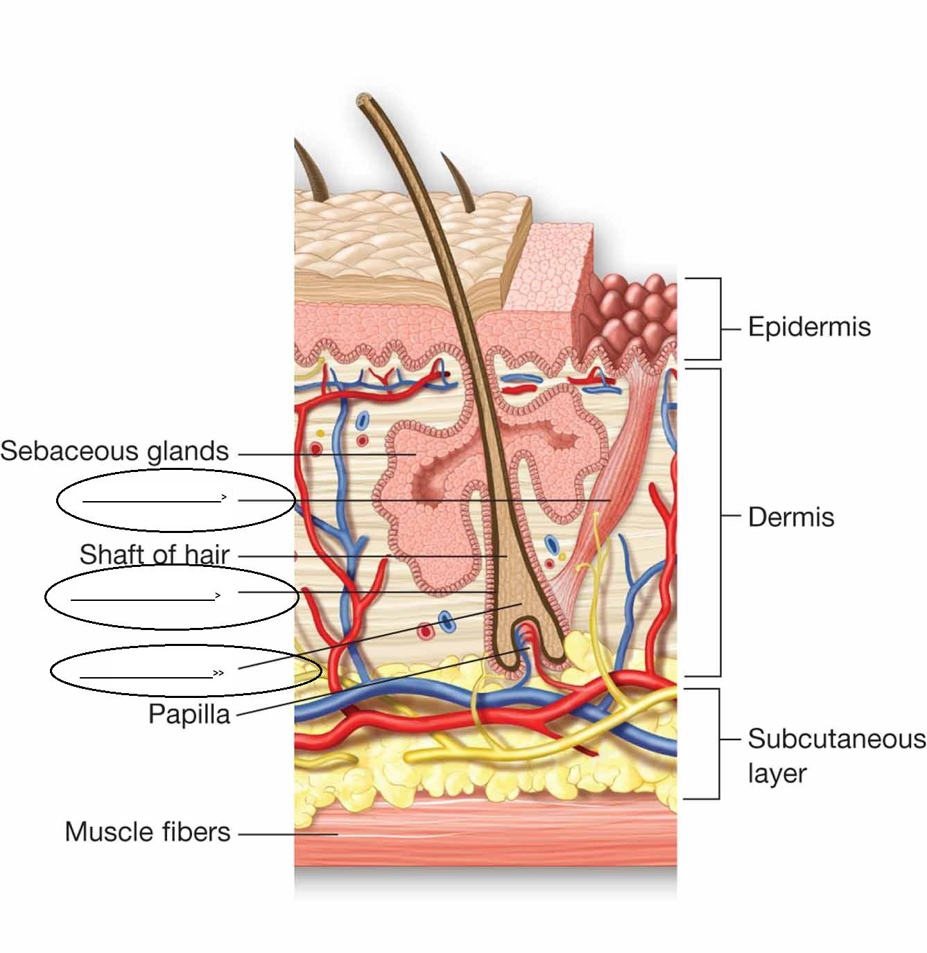 sannu s story anatomy and physiology Книга doom стреляй и иди в формате txt книга doom код для вставки.
