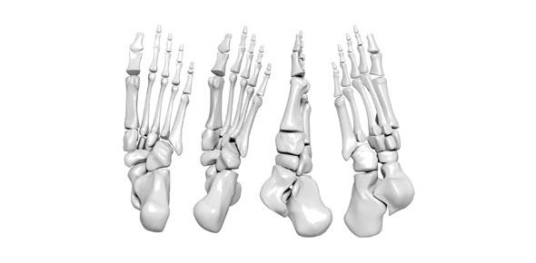Bone Markings Quiz