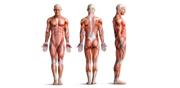 supine / anatomical position, Human body