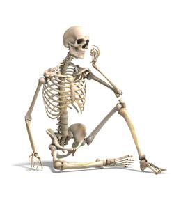 Name The Bone