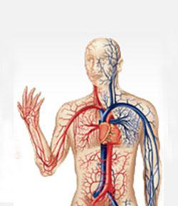 Circulatory System Final Test