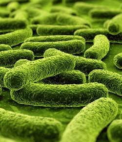 Practice Microbiology Quiz