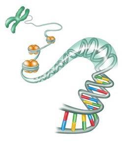 Genetics Practice Test