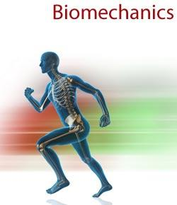 Basic Biomechanics And Levers