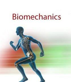 Basic Biomechanics And Levers