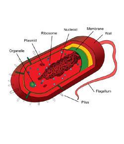 Eukaryotes Vs. Prokaryotes