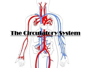 circulatory system quizzes trivia questions answers proprofs quizzes. Black Bedroom Furniture Sets. Home Design Ideas
