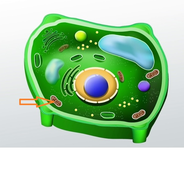 Answer These Plant Cell Structure Flashcards Flashcards by ...