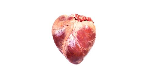 Label The Human Heart ProProfs Quiz