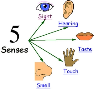 Sense organs review questions ccuart Image collections