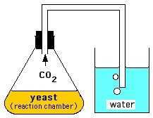 lab 8 experiment 1 fermentation by yeast Title: demonstration of fermentation using yeast cells comments text but please make sure that you include deviations from the lab manual in your experiment.