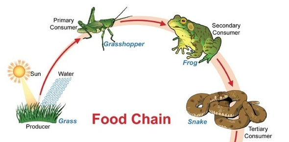 Why are food chains limited to 4 5 tropic levels? - ProProfs Discuss