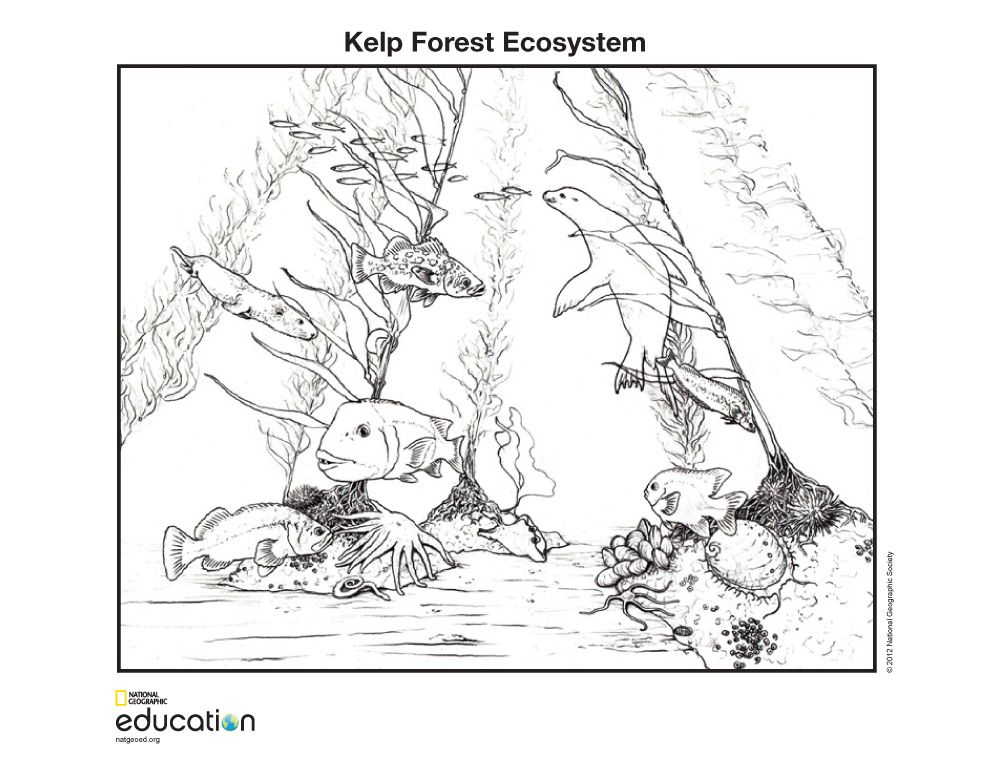 Ecosystem Jigsaw Puzzles Proprofs Jigsaw Puzzle Games