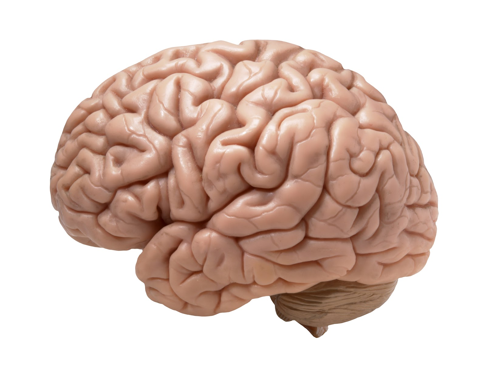 Brain Jigsaw Puzzles - ProProfs Jigsaw Puzzle Games