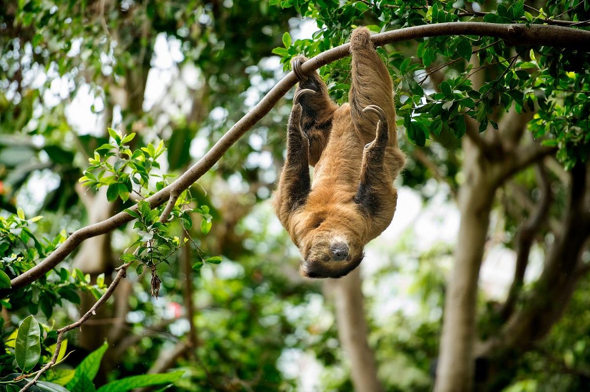 Tropical Rainforest Animal