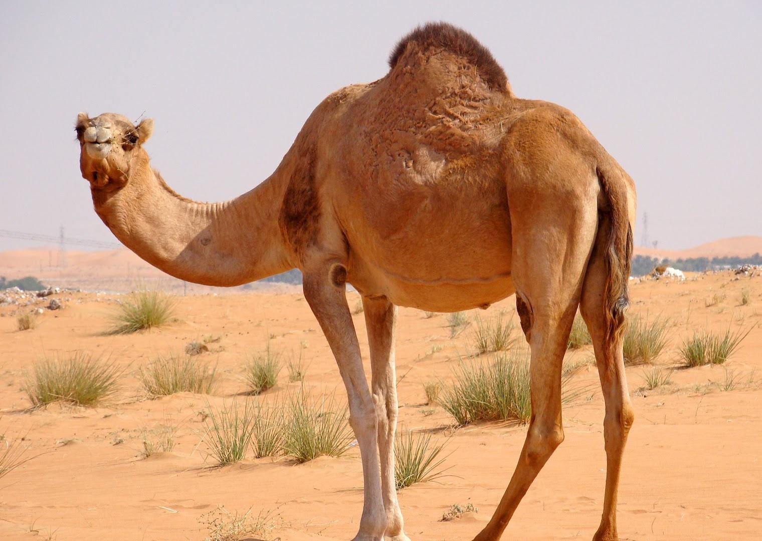 Animal Live In The Desert